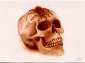 Tarantula-Skull